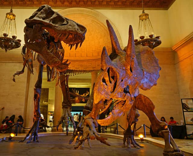 Natural History Museum - Los Angeles Attractions